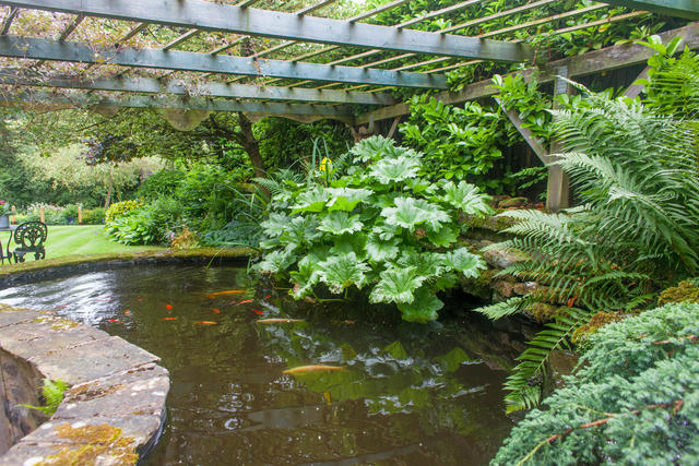 Fish Pond - rest assured there is  a secured safety grate covering the pond