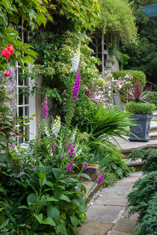 Mature garden with a variety of flowering plants