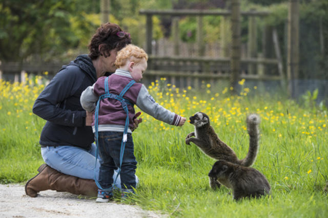 Peak District Family activity animals